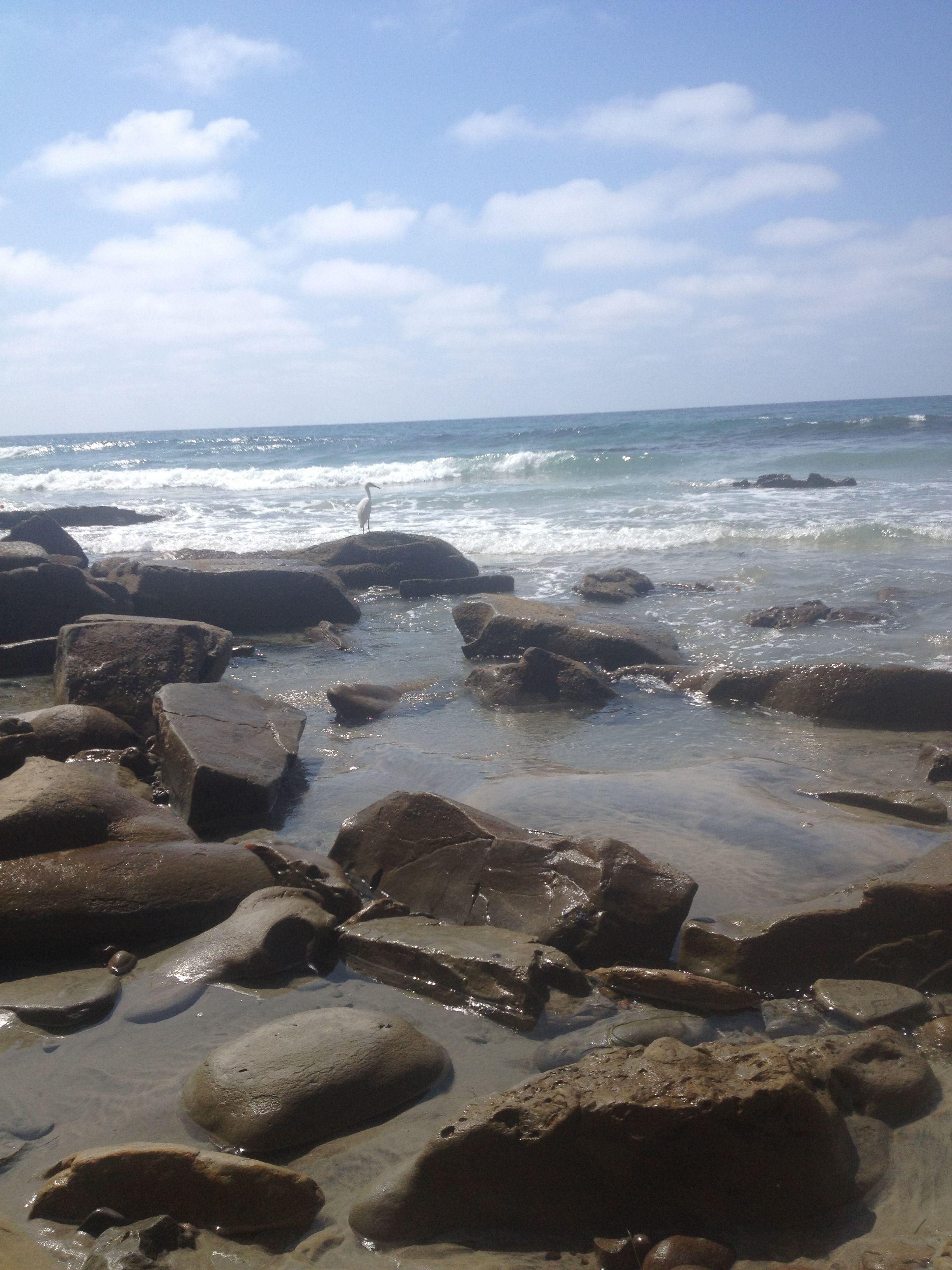 Beach Scenery, Ocean Beach, Beach