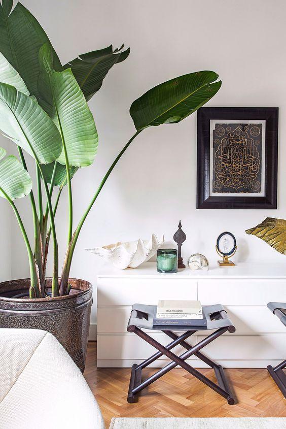 Piante casa banano nel 2019 piante in soggiorno for Piante di case