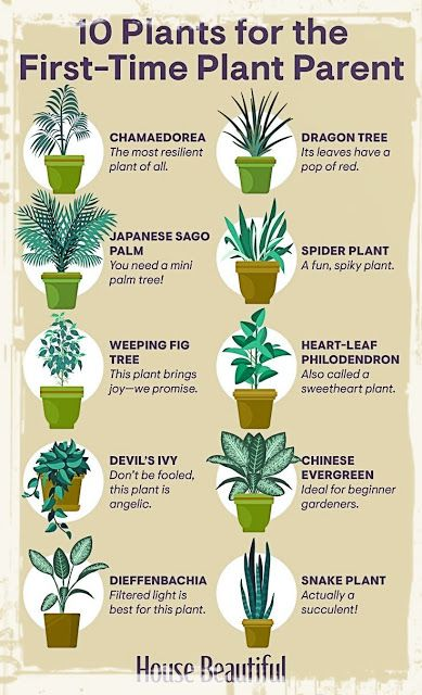 10 Plant For The Firs Time Plant Parent In 2020 Plants Planting Herbs Household Plants