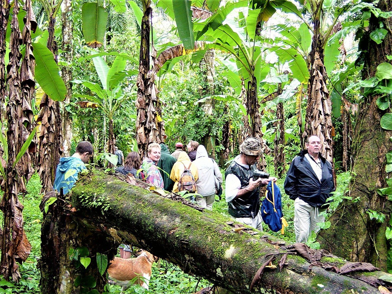 Visite d'une bananeraie 2003 Costa Rica