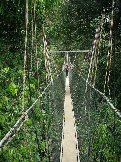 Canopy walkway - Taman Negara National Park Malaysia & Canopy walkway - Taman Negara National Park Malaysia | Malaysia ...