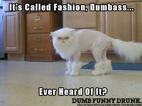 Dumb Ass Cats 74
