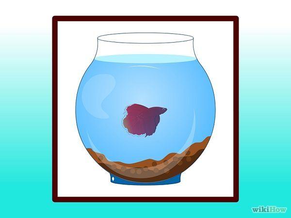 Clean a Betta Fish Tank Step 11.jpg