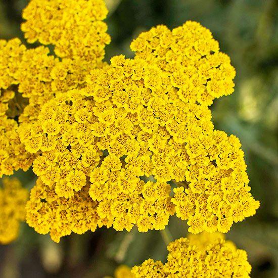 16 Long Living Perennials You Should Plant Right Now Flowers Perennials Hardy Perennials Plants
