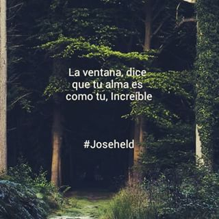 Bosques Tumblr Frases Buscar Con Google Frases Pinterest