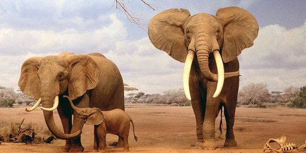 No ritmo atual pode ser que em apenas 9 anos a extinção destes animais seja…