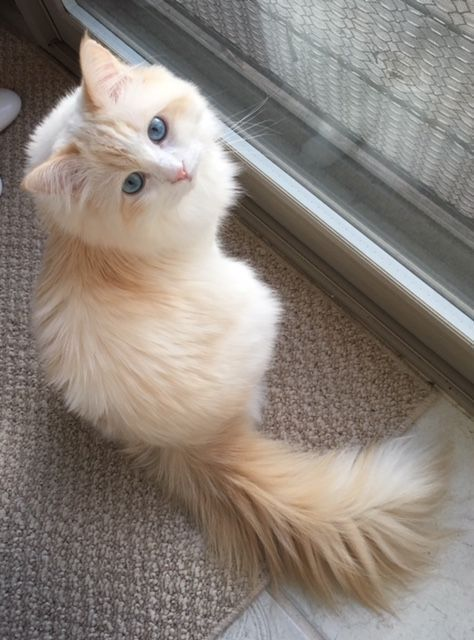 New Snap Shots cats and kittens facts Suggestions Once you bring a fresh kitten within your house it becomes an exhilarating time frame and for some pet owne