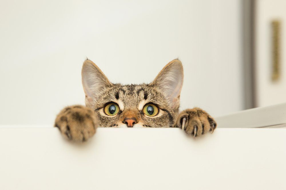 This Is Why Cats Are Afraid Of Cucumbers In 2020 Cat Care Your Pet Cat Facts