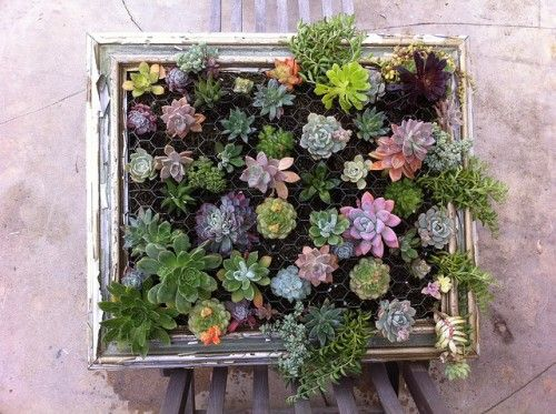 hanging succulent garden-- a new take on the window flower box.