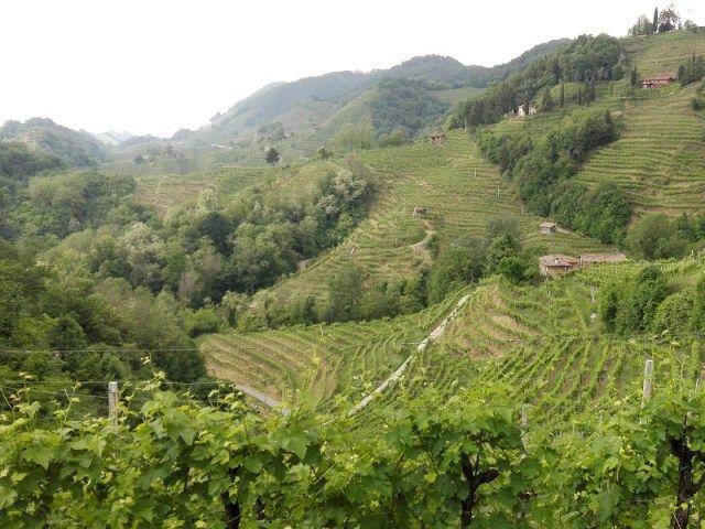 """La Strada del Vino di Conegliano-Valdobbiadene: alla scoperta di un territorio """"superiore"""""""