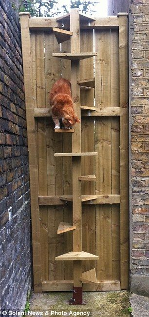 It Was A Joint Effort Arthritic Cat Is On Top Of The World After Owners Build Him A Spiral Staircase To Get Over Garden Fence Cat Ladder Diy Cat Enclosure Cat