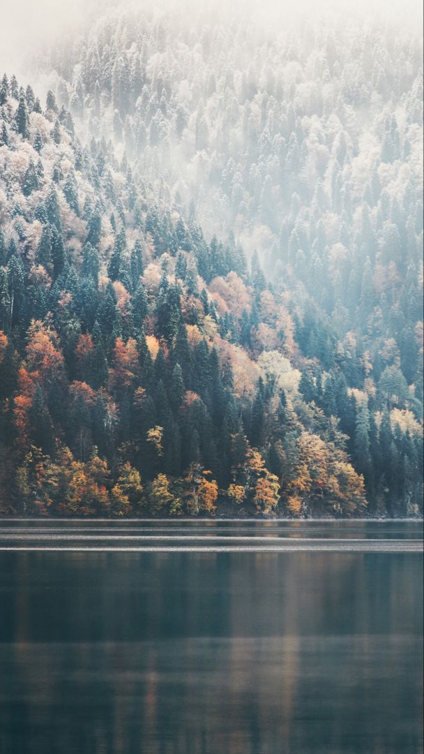 Foggy forest wallpaper for your iPhone from Vibe app