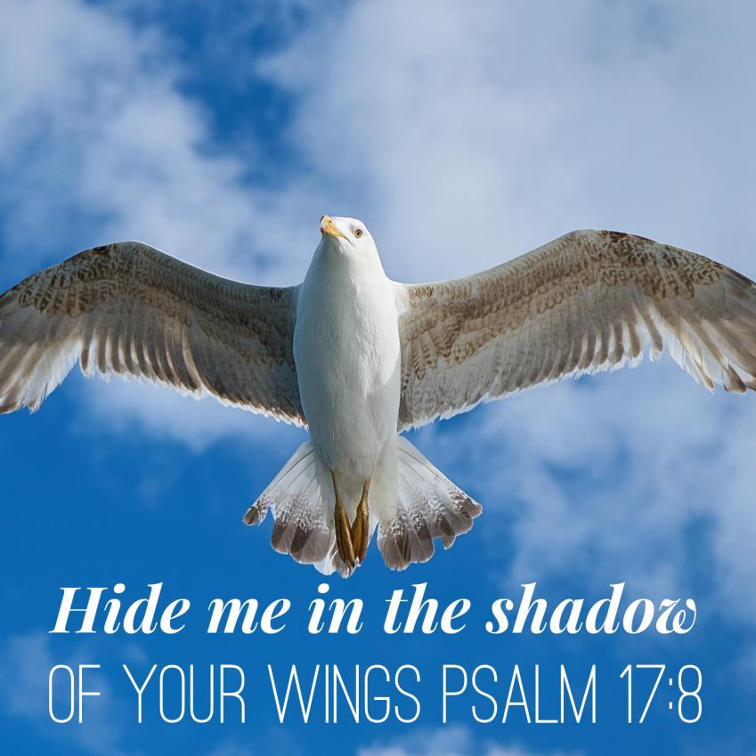 A Prayer From Psalm 17 Psalm 17 Psalms Prayers