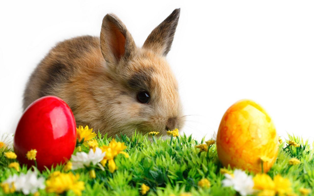 Easter 2013 Free Hd Wallpapers Cute Bunnies