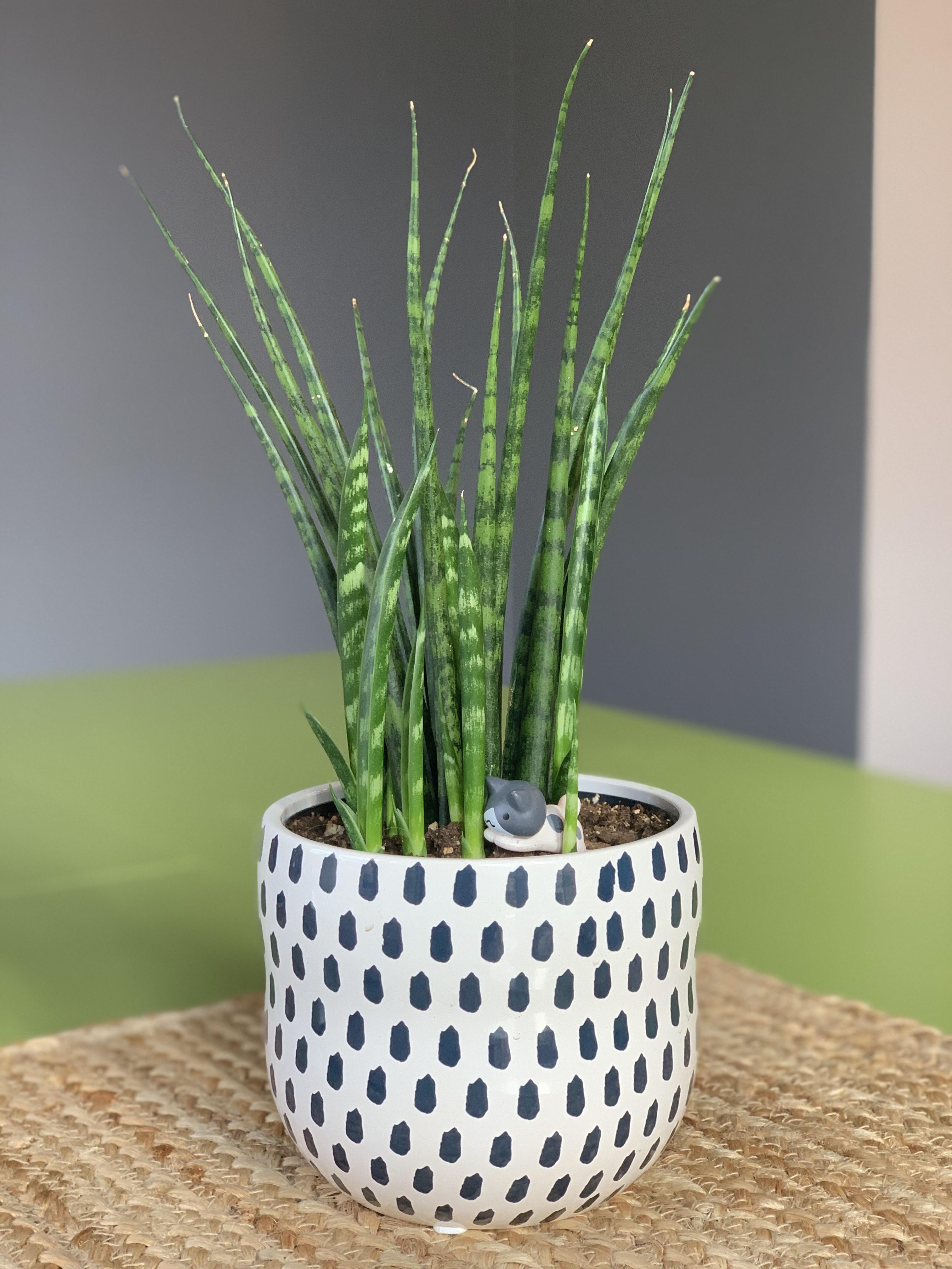 10 Best Indoor Plants In 2020 Best Indoor Plants Rubber 400 x 300