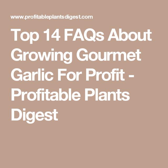 5 Steps To Growing Profitable Gourmet Mushrooms Plants Digest