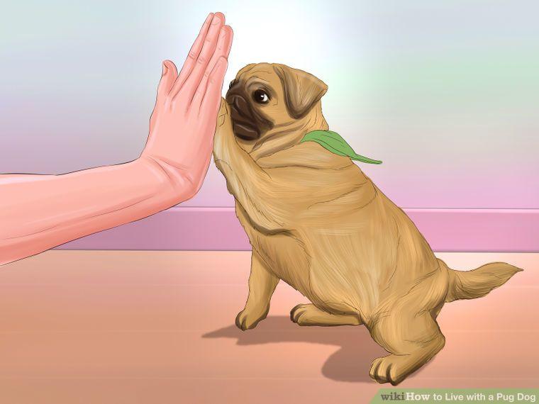 Live With A Pug Dog Pugs Pug Puppies Dog Steps
