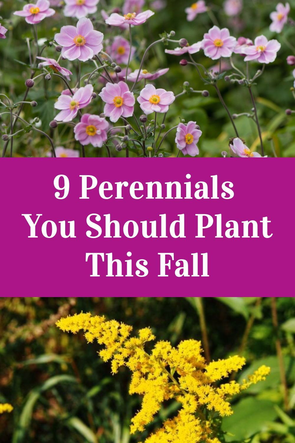 9 Perennials You Should Plant This Fall In 2020 Plants Fall Perennials Perennials