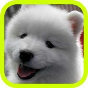 Cute Puppies Cute Dogs Images Cute Puppies Puppy Pictures