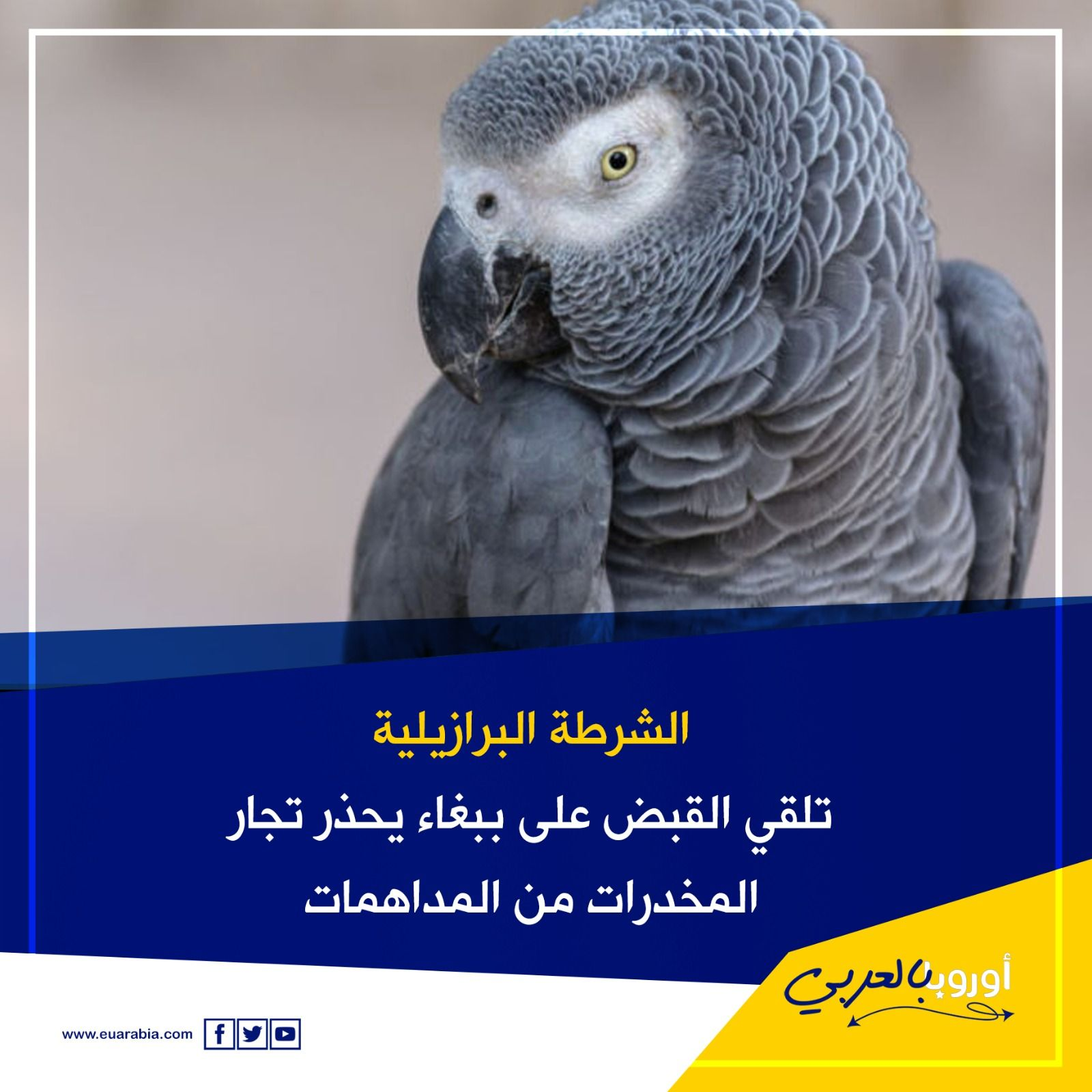 ببغاء جاسوس Parrot Animals