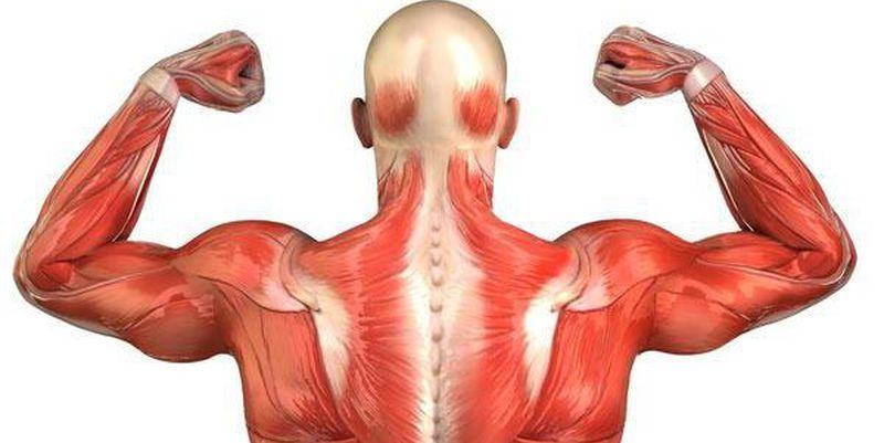 Скачать видео работа мышц