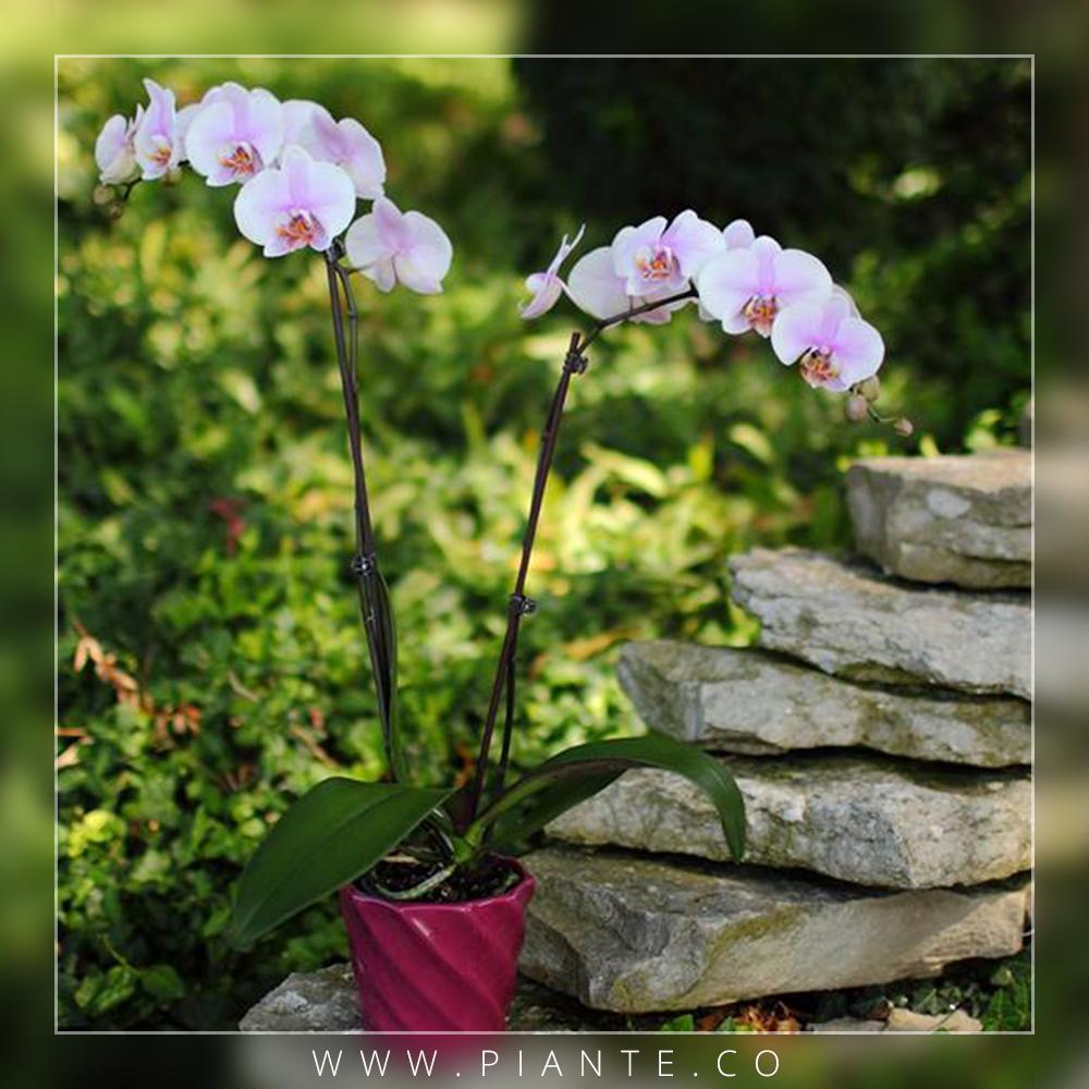 Piante El sitio donde coloquemos la orquídea debe ser de fácil ...