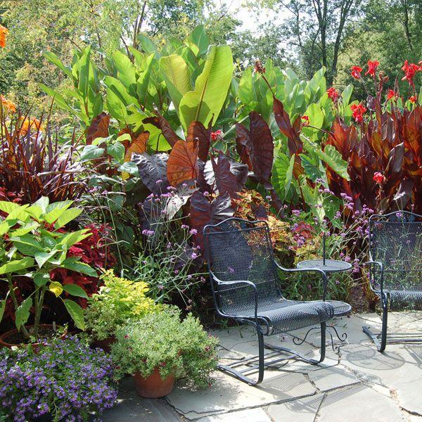 Tropical Border Plant | P.P Jardines, plantas y flores | Pinterest ...
