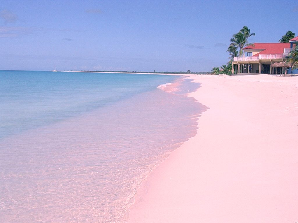 The pink sand at Low Bay, Barbuda. Description from ...