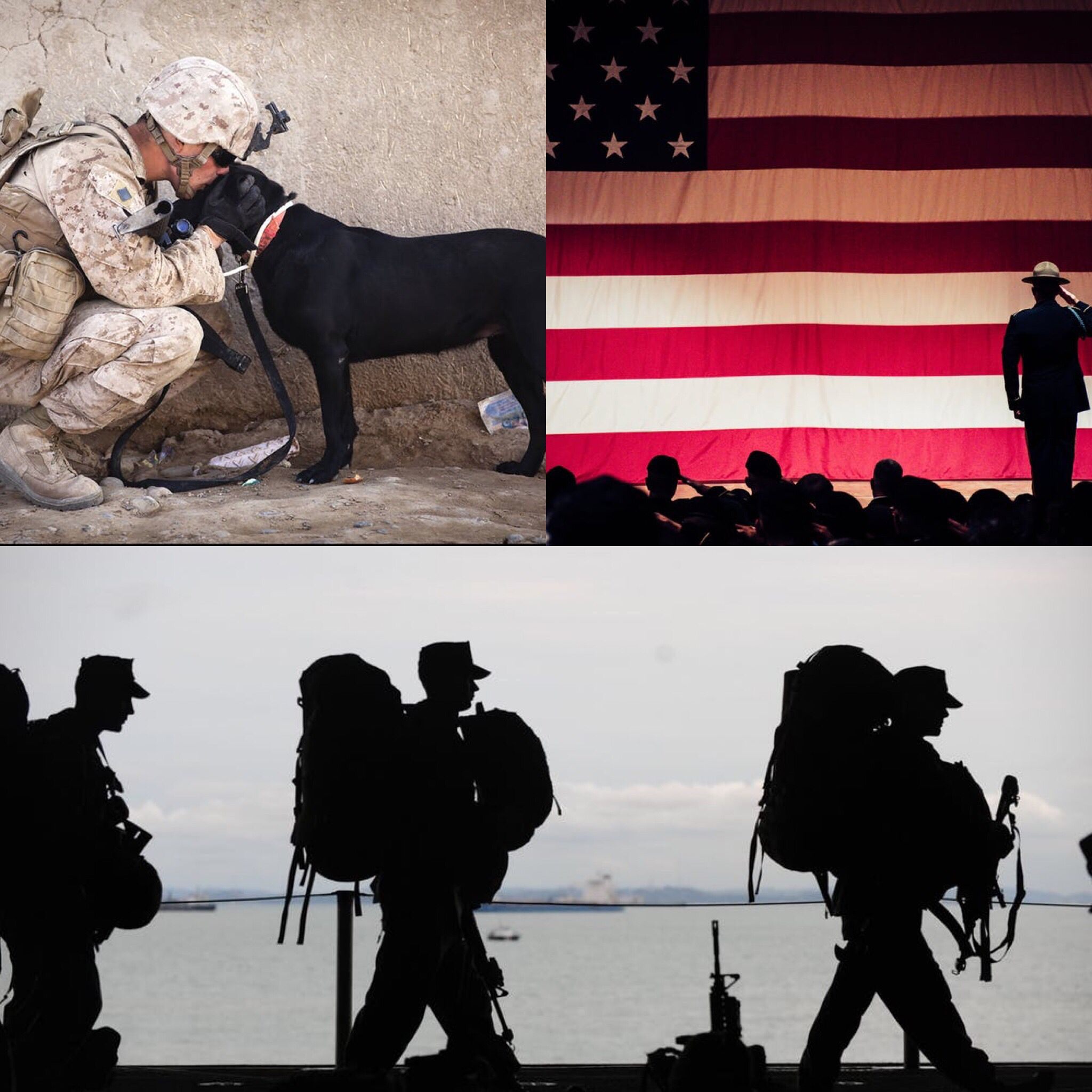 As A Veteran Owned Business It Is Our Honor To Celebrate National Military Appreciation Month If You Have Served Our Gr With Images Dog Life Dog Sports Jersey Pet Parent