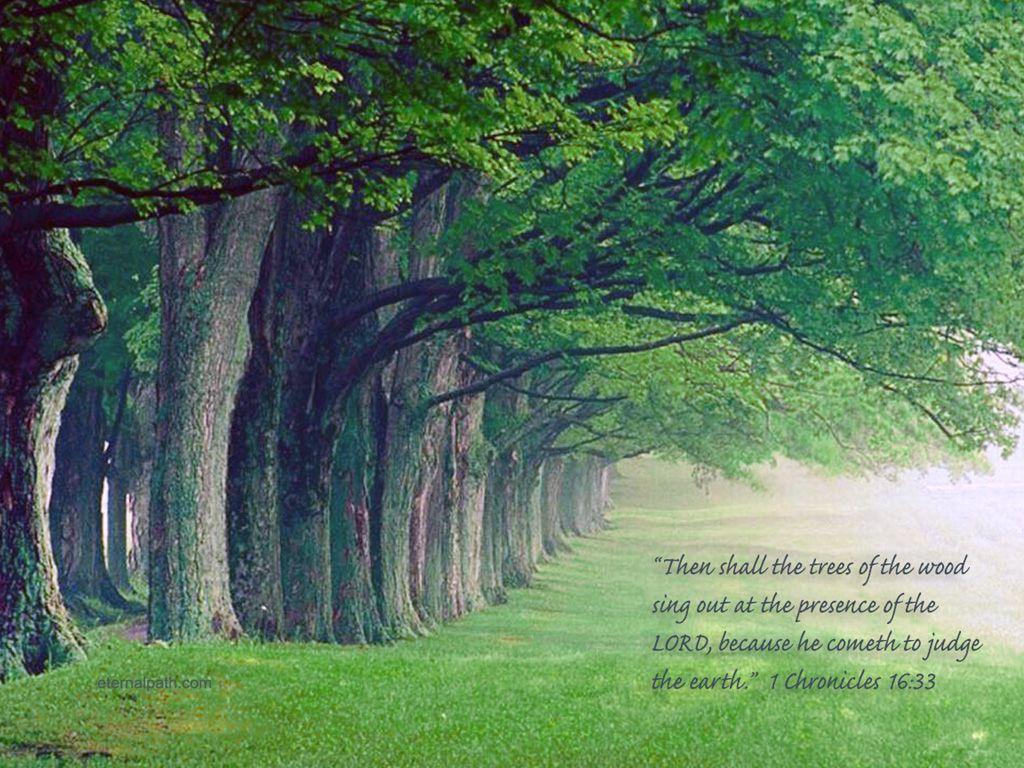 1 Chronicles 16 33 Sing For Joy Christian Wallpaper Tree Wallpaper Backgrounds Free Christian Wallpaper