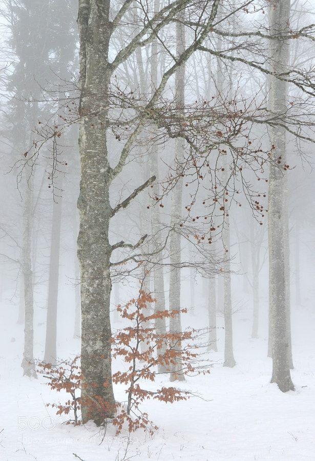 http://ift.tt/2jr6Zkd #Nature_breathtaking #Photos Faggi e neve by renavett