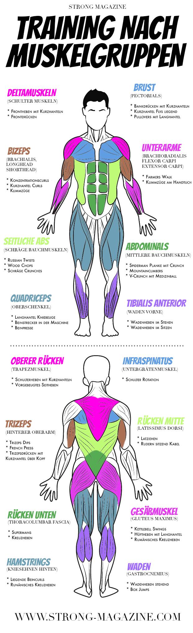 Großzügig Schulter Anatomie Muskeln Diagramm Fotos - Menschliche ...