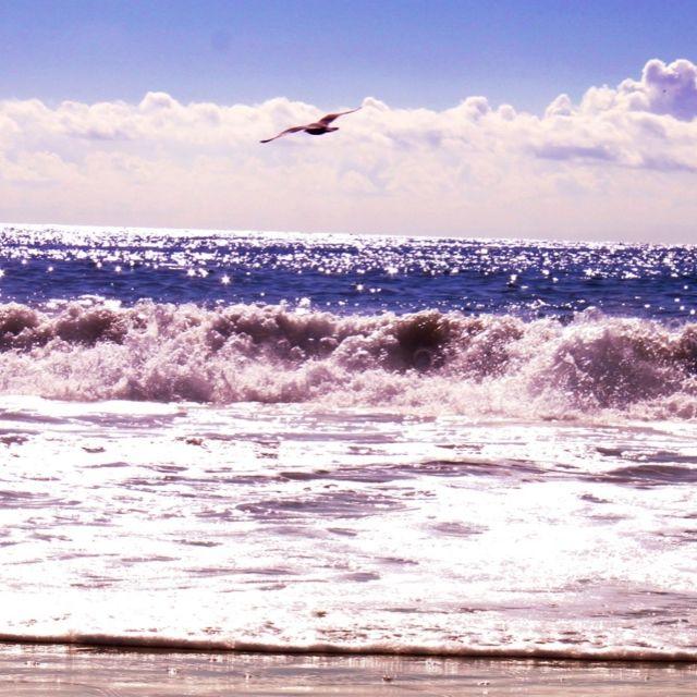 Laguna Beach Wave