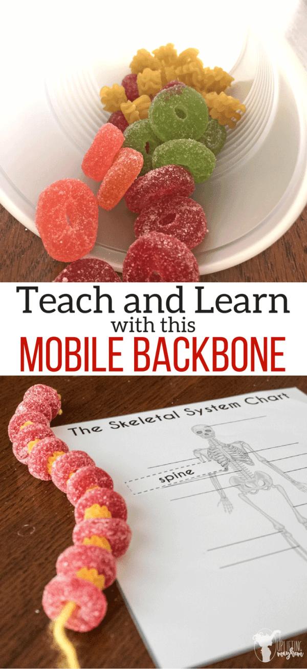 DIY Mobile Backbone | El cuerpo humano, Cuerpo humano y El cuerpo