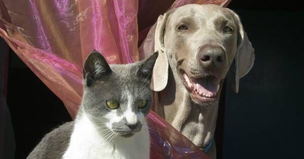 zvieranie mačička