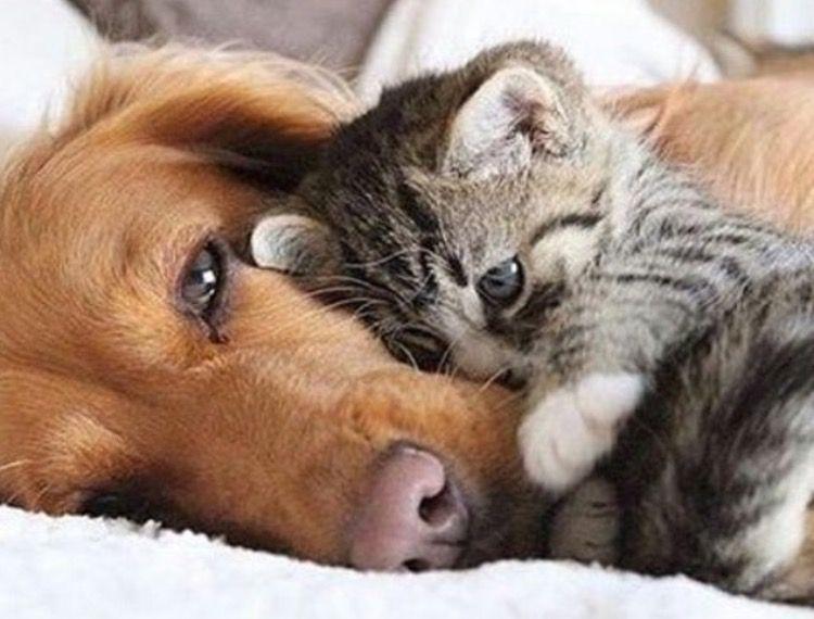Friends Forever Fav Pets Pinterest Animales Gato Y Mascotas