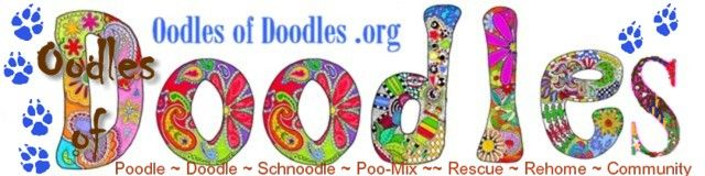 OodlesofDoodles org Oodles of Doodles-RESCUE/REHOME RESOURCE for