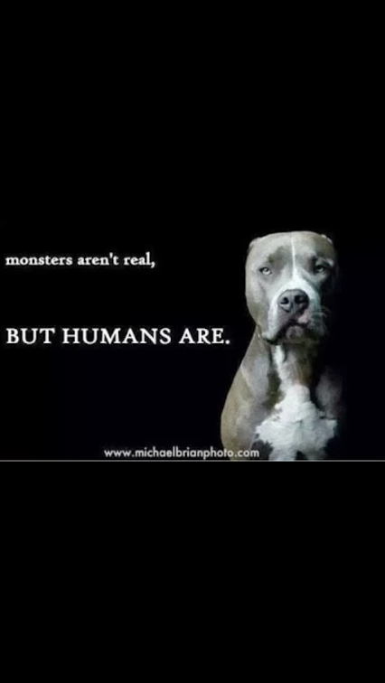 Stop Animal Abuse BenAndySqueeky Animals Dogs Stop Animal Cruelty Amazing Animal Abuse Quotes