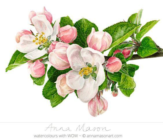 Pin von sabine gschlecht auf tatoos Blumen malen, Blumen