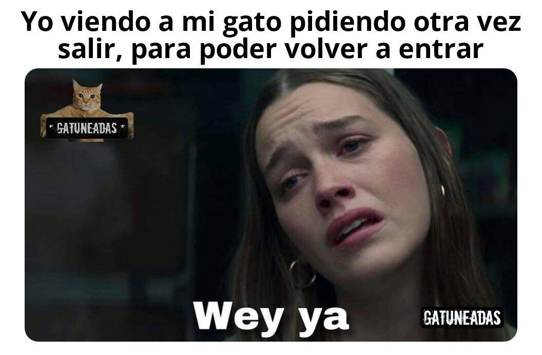 Gatuneadas In 2020 Memes Funny Memes Spanish Memes