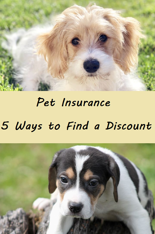 Pet Insurance - 5 Ways to Find a Discount | Pet insurance ...