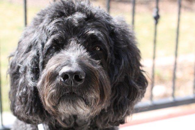 Bluehost Com Arthritis Diet Dog Care Senior Dog