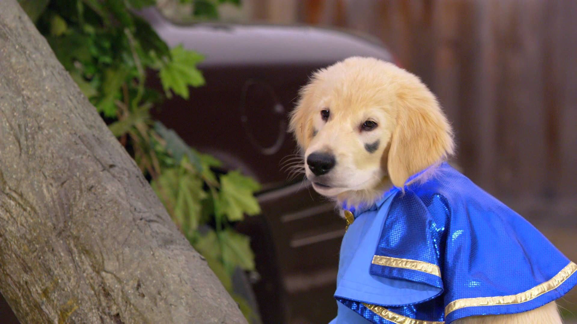 Super Buddies Trailer Air Buddies Movies Buddy Movie Dog