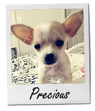 Meet Precious! She's our Pet of the Week! Breed Apple