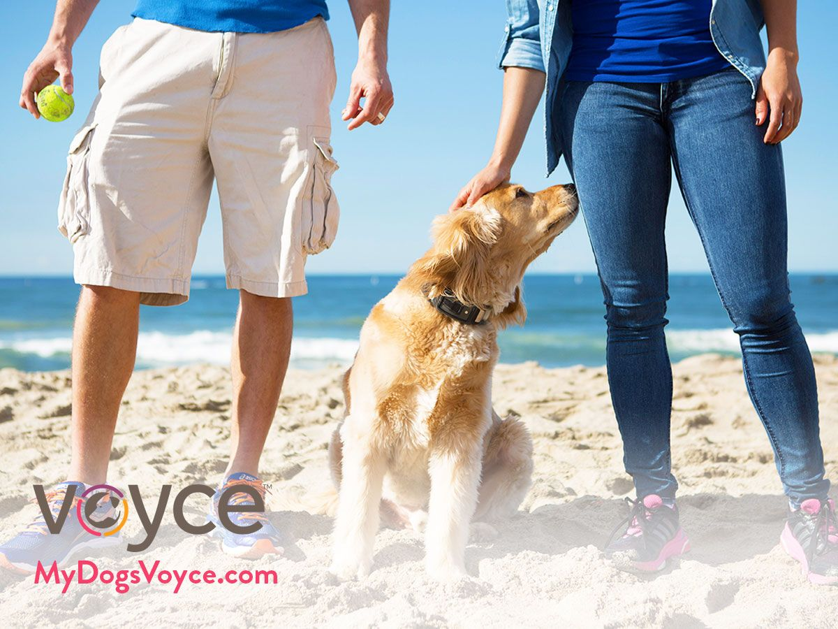Access a Symptom Checker and Much More With the Voyce