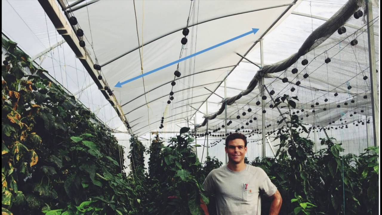 Tropical And Hot Climate Greenhouse Design Natural Ventilation Augmente
