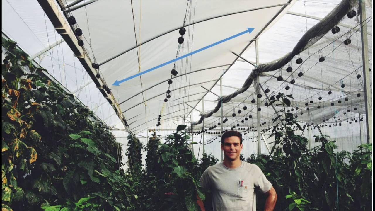 tropical and hot climate greenhouse design natural ventilation augmente garden ideas. Black Bedroom Furniture Sets. Home Design Ideas