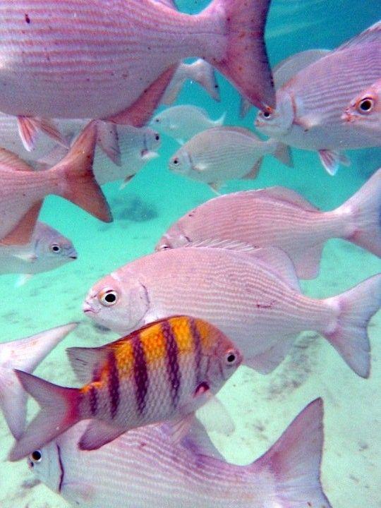 Beauty Pink Fish Tropical Fish Ocean Creatures