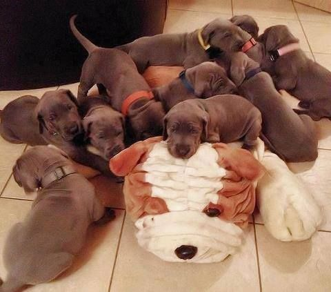 adorable !   Baby dogs, Animals beautiful, Cute animals