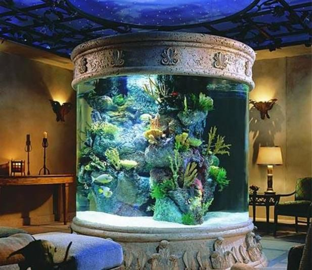 Image gallery sphere aquarium for Labyrinth fish tank